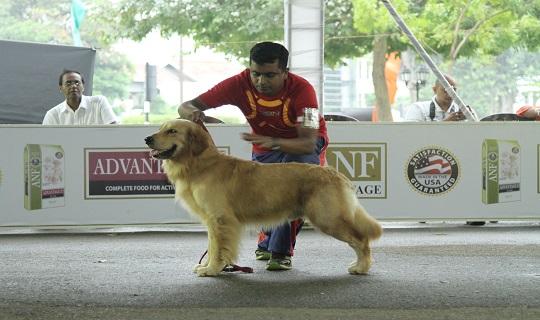 The Kennel Association of Lanka